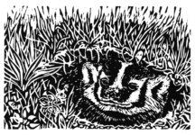 Understanding laws badger